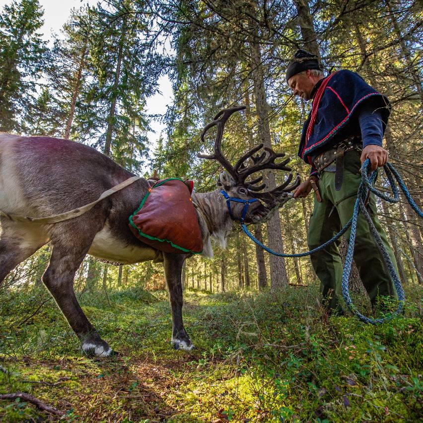 Reindeer life Syöte